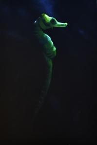 peixe02