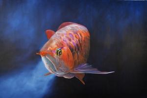 peixe21